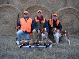 Pheasant Hunts in Frederick South Dakota.
