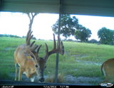 Whitetail Deer Hunting Florida at Three Generations Farm.
