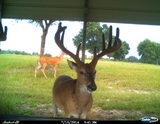 Florida Deer Hunting Preserve and Hunting Lodge.