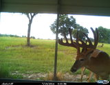 Quality Deer Breeders in Florida, Three Generations Farm.