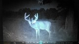 Ohio Whitetail Deer Hunting Outfitters.