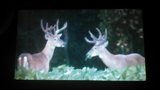 Trophy Bucks Ohio Pacconis Trophy Deer Hunts.