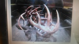 meigs county locked horn bucks