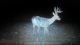 ohio giant whitetail
