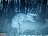 Late Season Rut
