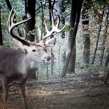 Pacconis Trophy Whitetails of Ohio, He