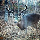 Pacconis Trophy Whitetails of Ohio, Deer Hunting