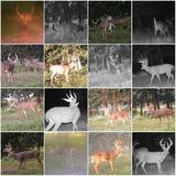 Trophyt DeerOX Factor Whitetails of Ohio.