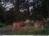 Huge WQhitetails in Ohio X Factor Whitetails.