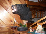 Bear Hunting Canada Island Safaris.