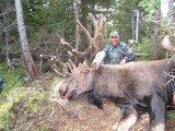 Bow Hunting Moose in Canada.