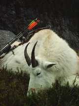 Northern Interior Outfitting, Hunting Mountain Goat British Columbia.