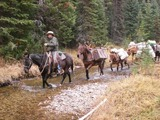 Gospel Mountain Outfitters, Elk Pack in Trips.