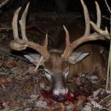 Wild Outdoor Whitetails Hunting Ranch, dead buck