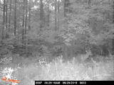 Southampton Outfitters, Trail Cam