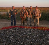 Caza y Safaris, Dove Hunting Argentina.