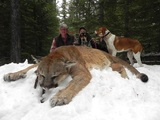 Silver Spur Outfitters & Lodge, Mountain Lion Hunting