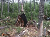 2 G Outfitters, Black Bear Hunts