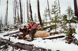 Wemple Outfitting, Montana Elk Hunt