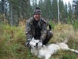 Udells Guiding and Outfitting, Wolf Hunting