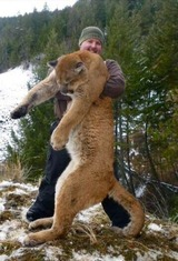 Lockwood Outdoors, Mountain Lion Hunts