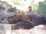 Giant Arizona Spot and Stalk Bear Hunting
