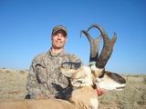 Giant Arizona Pronghorn Antelope