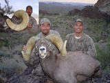 Arizona Desert Bighorn Sheep