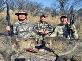 Arizona Guided Hunts, Muzzleloader Javelina Hunt