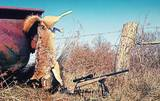 Monster Whitetail Outfitters, Coyote
