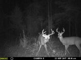 Sugar Camp Outfitters, 2017 Trail Cam