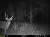 Sugar Camp Outfitters, Trail Cam Deer