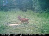 Kentucky Whitetail Deer Hunts, Trophy Bucks In Kentucky.