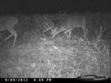 Whitetail Deer Hunting In Kentucky.