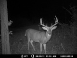Whitetail Deer Trail Camera Photo