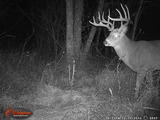 Deer Trail Cam Photo Kentucky Deer Hunting.