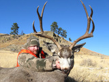Jimmy - Mule deer