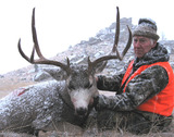 Howard - Mule deer
