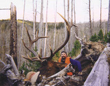 Big 6x6 Elk Hunt Montana