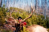 Montana Elk Hunting Outfitters.
