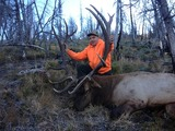 K Lazy Three Outfitters, Montana Elk Hunting