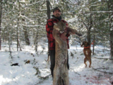 Montana Mountain Lion Hunts.