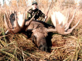 Alaska Guided Moose Hunting