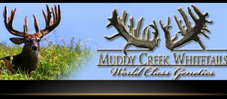 Muddy Creek Whitetails